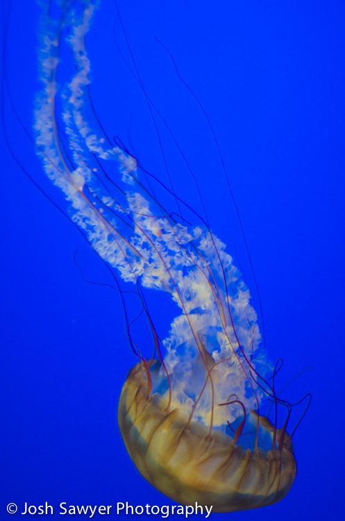 josh sawyer photography, monterey bay aquarium